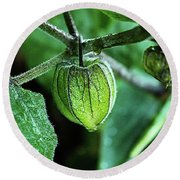 Cape Gooseberry In July Round Beach Towel