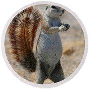 Cape Ground-squirrel  Round Beach Towel