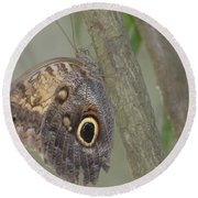 Captivating Photo Of A Brown Morpho Butterfly Round Beach Towel