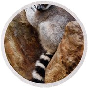 Captive Ring Tailed Lemur Perched In A Stone Tree Round Beach Towel
