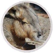 Capybara Resting In The Warm Sunlight Round Beach Towel