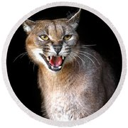 Caracal Hissy Fit Round Beach Towel