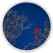 Cardinal Against Blue Sky Round Beach Towel