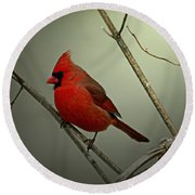 Cardinal And The Setting Sun Round Beach Towel