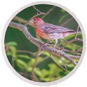 Cardinal Bird In The Wild In South Carolina Round Beach Towel