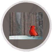 Cardinal Drinking Round Beach Towel