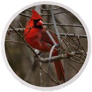 Cardinal In Spring Round Beach Towel
