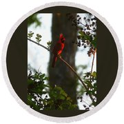 Cardinal In The Crepe Myrtle Round Beach Towel