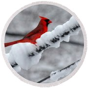 Cardinal In The Snow Round Beach Towel