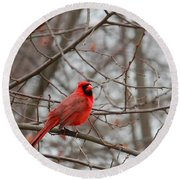 Cardinal In The Winter Round Beach Towel