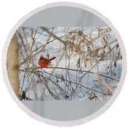 Cardinal In Winter 2 Round Beach Towel