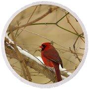 Cardinal In Winter Round Beach Towel