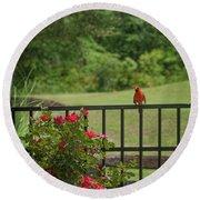 Cardinal On Fence Round Beach Towel