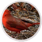 Cardinal On Pine Straw Round Beach Towel