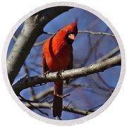 Cardinal On Watch Round Beach Towel