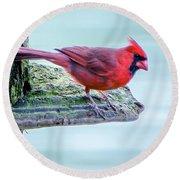 Cardinal Perched Round Beach Towel