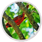 Cardinal Red Round Beach Towel