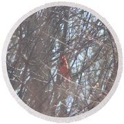 Cardinal Singing  Round Beach Towel