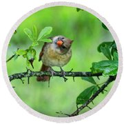 Cardinal Ways Round Beach Towel