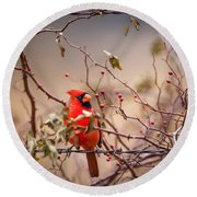 Cardinal With A Mouthful Of Hips Round Beach Towel