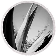 Carmel Mission Agave In B And W Round Beach Towel