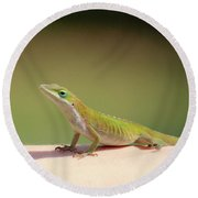 Carolina Anole Round Beach Towel