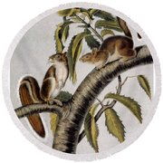 Carolina Grey Squirrel Round Beach Towel