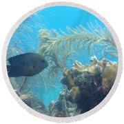Carribean Sea Life Round Beach Towel