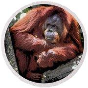 Cartoon Comic Style Orangutan Sitting In Tree Fork Round Beach Towel