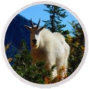 Cascade Range Mountain Goat Round Beach Towel