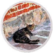 Cat Against Stone Round Beach Towel