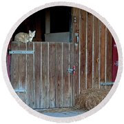 Cat And Barn Round Beach Towel