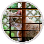 Cat At The Window Round Beach Towel