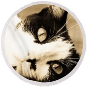 Cat Days Of Summer Round Beach Towel