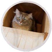 Cat In A Box Round Beach Towel