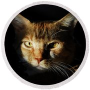 Cat In Shadow Round Beach Towel
