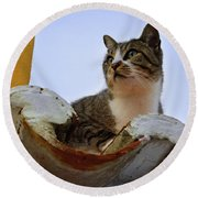 Cat In The Roof Round Beach Towel