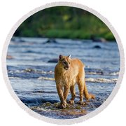 Cat On The River Round Beach Towel
