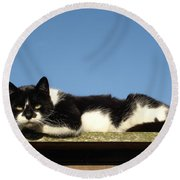 Cat On The Roof Round Beach Towel