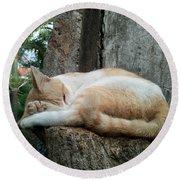 Cat On The Tree Round Beach Towel