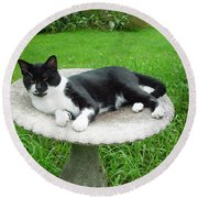 Cat Relaxing In A Birdbath In The Summertime  Round Beach Towel