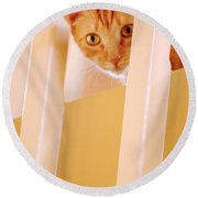 Cat Spy Round Beach Towel