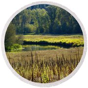 Cat Tails In The Sun Round Beach Towel