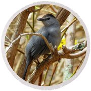 Catbird In Spring Round Beach Towel