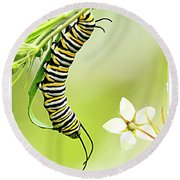 Caterpiller On Plant Round Beach Towel