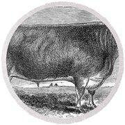 Cattle, C1880 Round Beach Towel