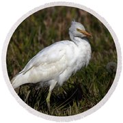 Cattle Egret  Round Beach Towel