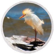 Cattle Egret In Breeding Plumage Round Beach Towel