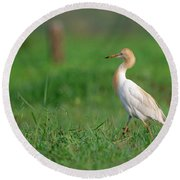 Cattle Egret In Greenery Round Beach Towel