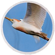 Cattle Egret On The Wing Round Beach Towel